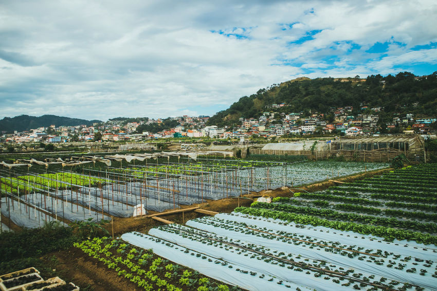 Variety of vegetables and fruits Mountain Mountainside EyeEmNewHere Farmland Vegetable Sky Outdoors Day No People