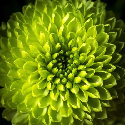 Macro Flowers Vivid Colours  Still Life Maximum Closeness