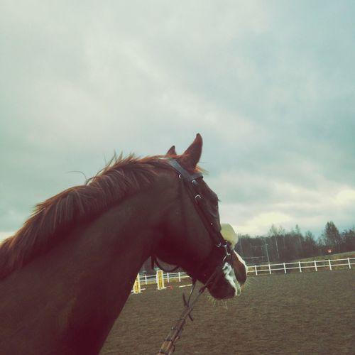 tin-tin Horse Jönköping Sweden