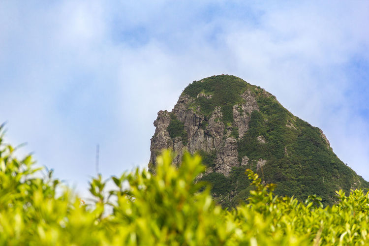 View at Le Pouce from jungle. Travel Beauty In Nature Cloud - Sky Day Green Color Growth Jungle Le Pouce Low Angle View Mauritius Mauritius Island  Mountain Nature No People Outdoors Plant Scenics Sky Tranquil Scene Tranquility Tree