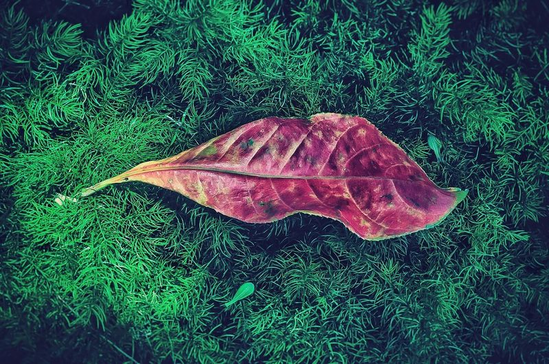 High angle view of autumnal leaf on grass