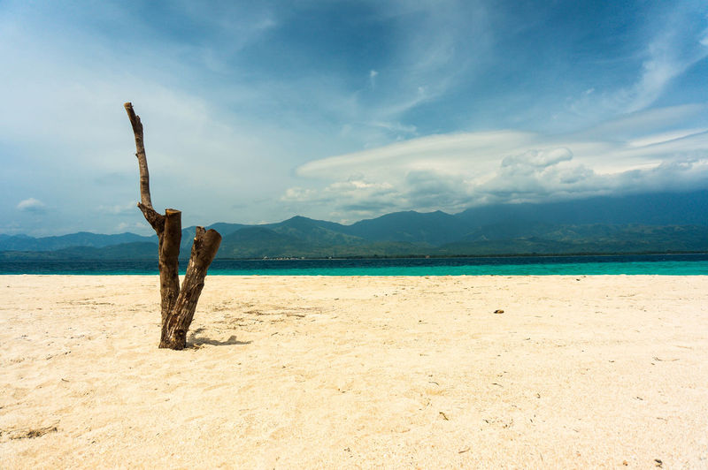 Tree living in the beach Tree Philippines Malalison, Antique Salt Adventure Light Peace Antique Relax Summer Sun Water Sea Beach Mountain Sand Blue Sky Cloud - Sky Island Calm Scenics Horizon Over Water Shore Ocean
