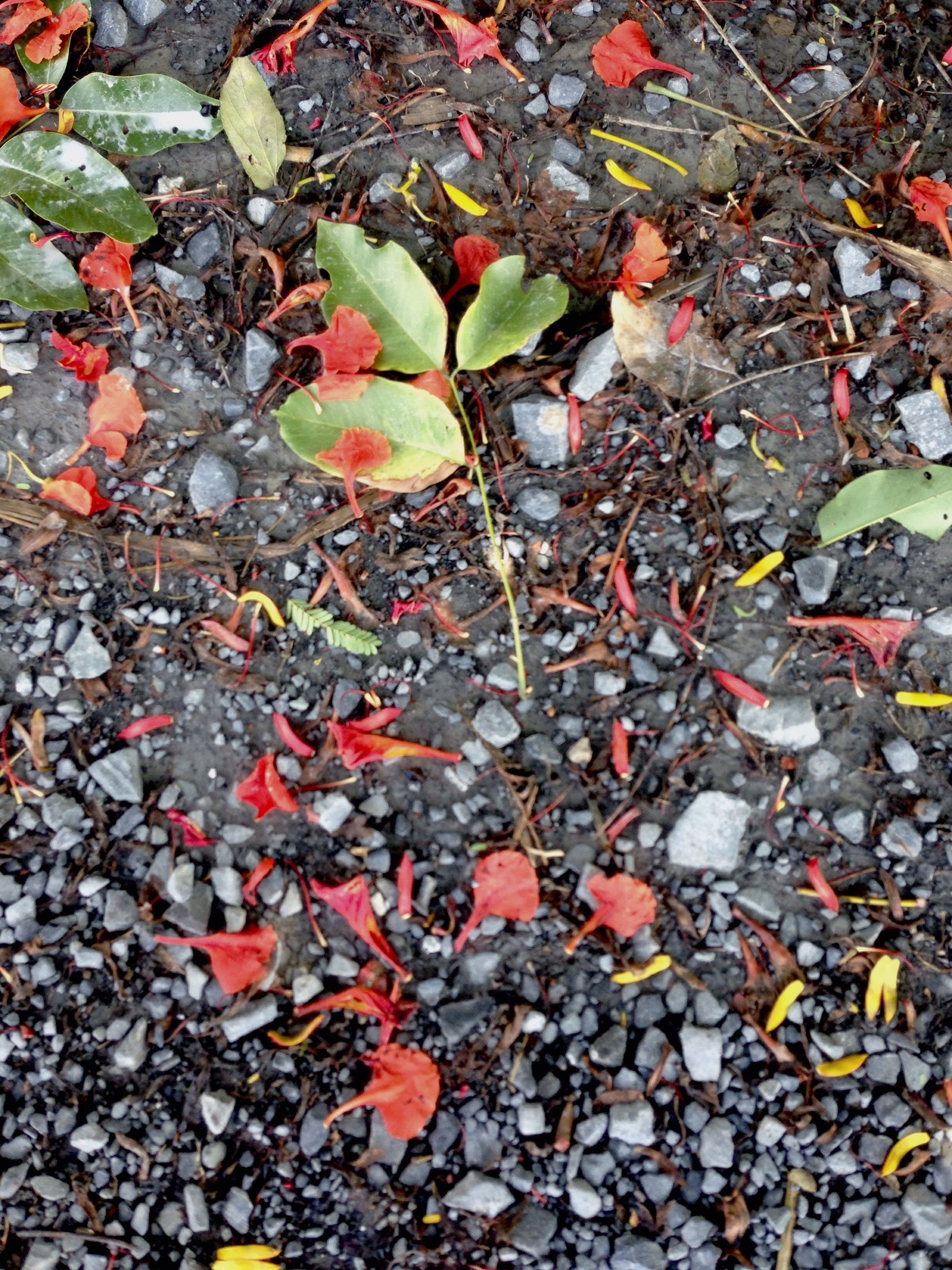 autumn, leaf, change, high angle view, fallen, season, dry, leaves, nature, stone - object, abundance, falling, day, outdoors, ground, pebble, tranquility, field, large group of objects, beauty in nature