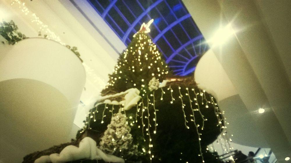 Marry X'mas , In the Mall the X mas tree.. Taking Photos Cristmas Everwhere Love It Natalcity