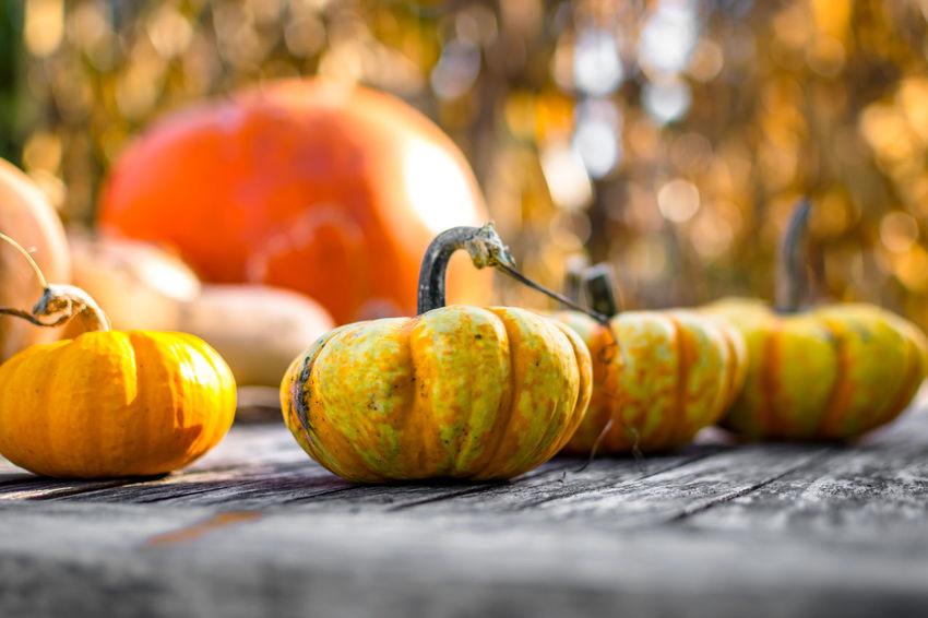Pumpkin Gourds Fall Fallbeauty Autumn Autumn Colors Autumn🍁🍁🍁 Autumn Collection Fall Collection Fall Colors Orange EyeEm Best Shots EyeEm Masterclass Vscocam EyeEm Gallery L4l VSCO Picoftheday Bestoftheday Likeforlike Follow Like Likes Pic Of The Day Photooftheday