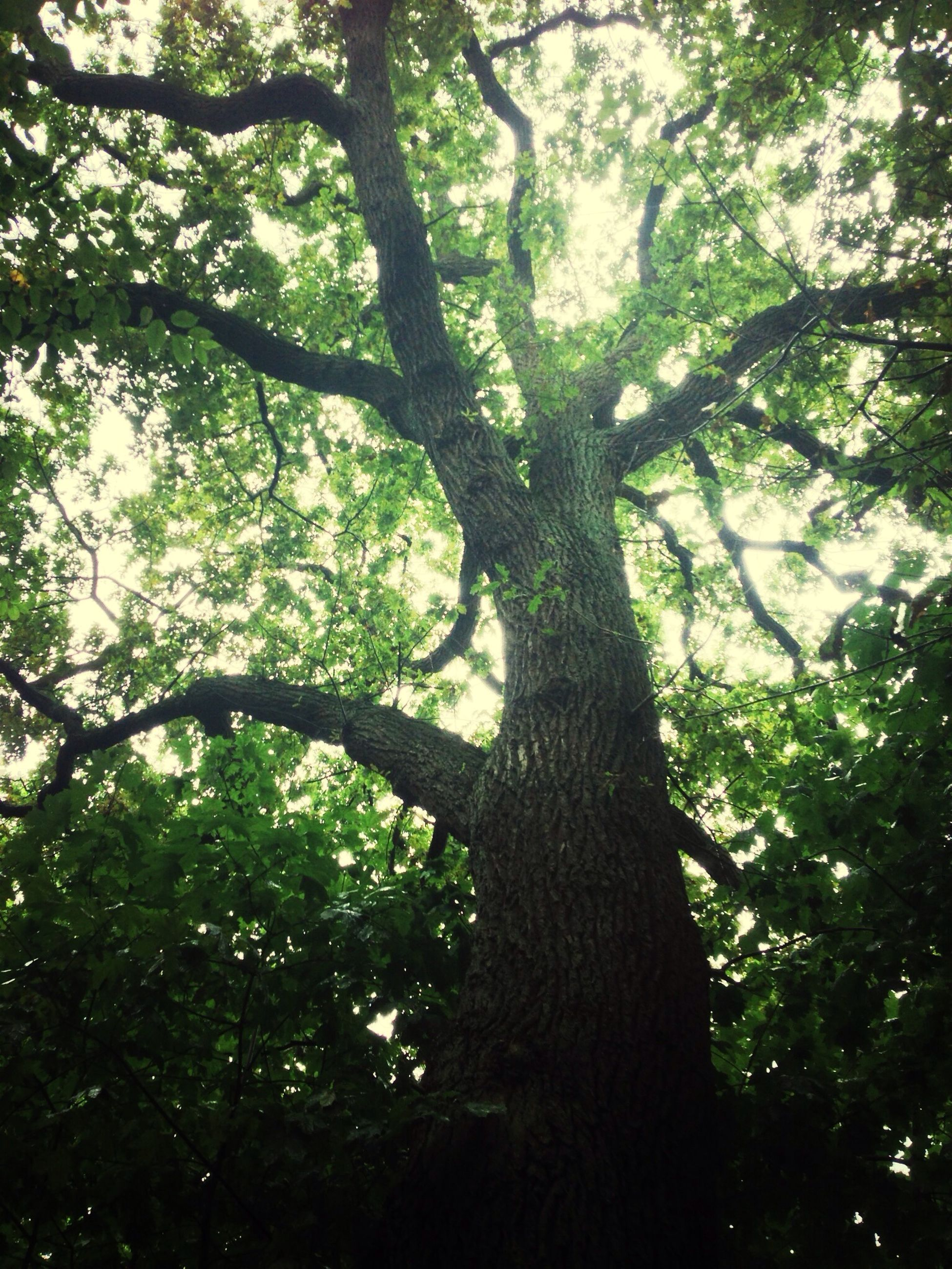 tree, tree trunk, growth, low angle view, branch, nature, forest, tranquility, beauty in nature, green color, day, woodland, outdoors, tranquil scene, no people, sunlight, scenics, sky, leaf, growing