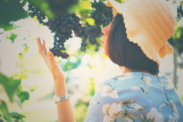 blur focus of portrait woman hand is holding a bunch of grapes. Women Young Women Rural Scene Headshot Mid Adult Agriculture Summer Close-up Straw Hat Petal In Bloom Flower Head Sombrero Blooming Pink Osteospermum Single Flower Vineyard Apple Tree Hibiscus Stamen Dahlia Pollen Growing Red Grape Picking Sun Hat