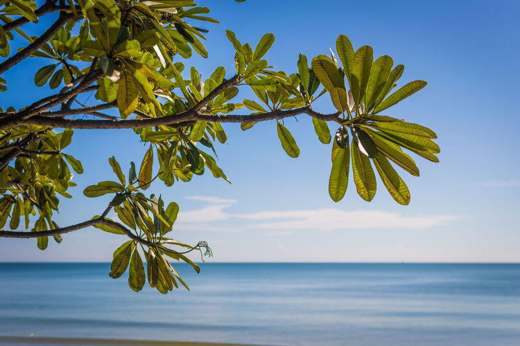Sand and Sea at HiaHin, Thailand Water Sky Sea Plant Beauty In Nature Horizon Over Water Horizon Tranquility Growth Nature Tree Leaf Scenics - Nature Plant Part Tranquil Scene Day No People Green Color Focus On Foreground Outdoors