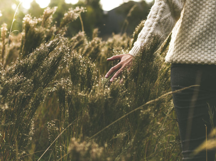 Midsection of woman touching plants while walking on field