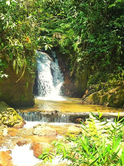 Nature Beauty In Nature Green Color Non-urban Scene Day Plant Water Flowing Place Of Interest Tranquil Scene Beautiful Day Forest Water Waterfall Scenics Forest Beauty In Nature Plant Nature Green Color Tranquil Scene Idyllic Growth Green Tranquility