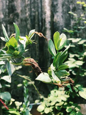 花落 Animals In The Wild Plant Animal Wildlife Animal Plant Part Growth Animal Themes Sunlight Close-up Green Color Leaf Focus On Foreground Nature Beauty In Nature Day Tree No People Invertebrate