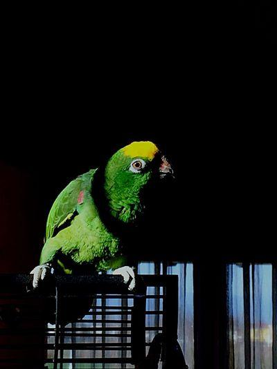 Parrot Colors Animals Sun