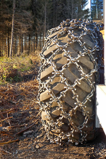 Close-up of rope tied to tree trunk in field