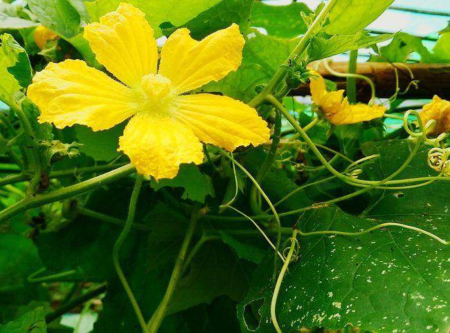 Growing vegetables 🌿🌺 Plants Vegetable Garden Vegetable Flower Woofing Volunteering Pak Song, Thailand Thailand Working Holiday