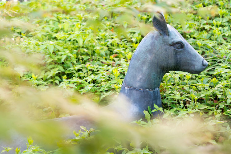 Deer Green Color Japan Animal Themes Day Domestic Animals Field Grass Growth Mammal Nature No People One Animal Outdoors Plant Tree