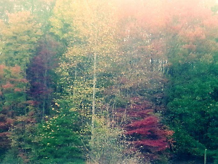 My Back Yard Autumn Trees Autumn 2015 Autumn Leaves Autumn Fall Season Fall Colors Fall Beauty Fall