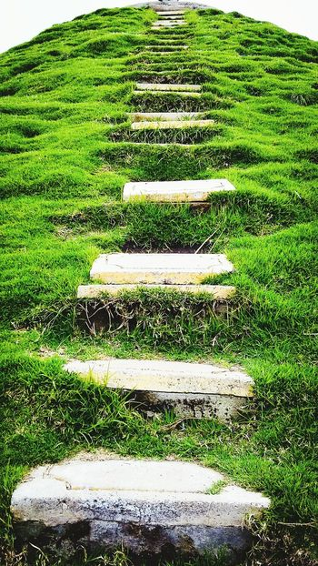 Stairs Stairways Stairway To Heaven Stairs Geometry Stairs & Shadows Stairsandsteps StairwaytoHeaven Stairs To Nowhere Staircase Vertigo Outdoors Nature Green Color No People Beauty In Nature Trees And Nature Backgrounds Ecuador♥ Travel Destinations Ecuador Nature Photography Vacations Travel Photography Green Color Nature Grass Coltaecuador