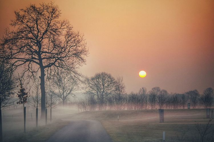 My Winter Favorites Misty sunrise! Nature Light And Shadow HDR EyeEm Gallery Darkness And Light Streamzoofamily Showcase: December Nature Photography Naturelovers Sunrise