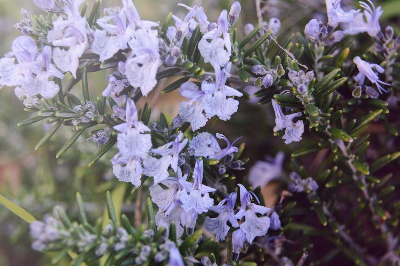 Backgroud Plant Flowering Plant Beauty In Nature Flower Growth Vulnerability  Freshness Fragility Close-up Purple No People Nature Petal Day Selective Focus Flower Head Full Frame Outdoors