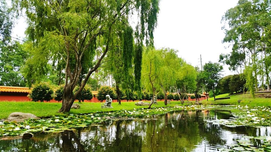 Nan Tien Temple Lily Pond Tranquility Peaceful Beautiful Nature EyeEm Nature Lover Pond Green Trees