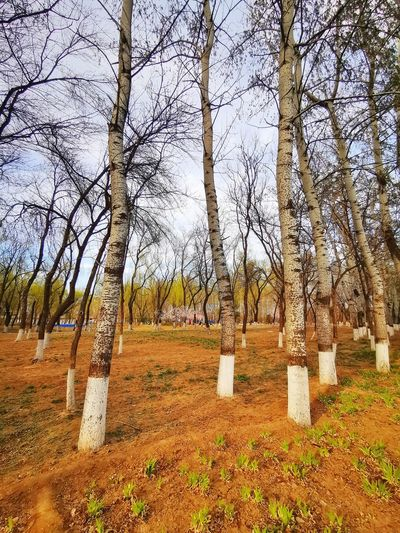 Bare trees in cemetery against sky
