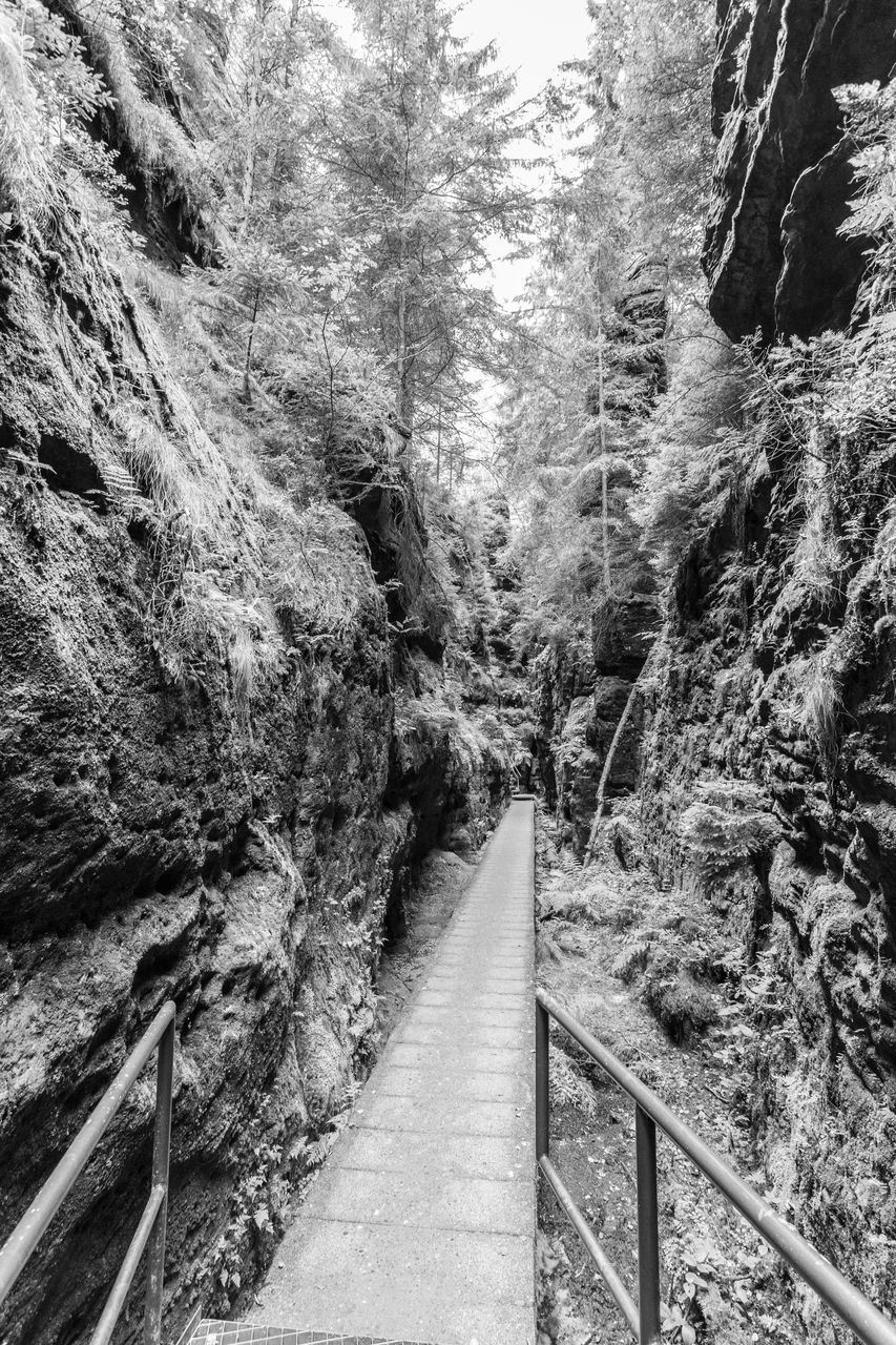 tree, plant, forest, no people, land, day, transportation, nature, non-urban scene, beauty in nature, tranquility, railing, the way forward, direction, tranquil scene, scenics - nature, footpath, outdoors, growth, mountain, track, long