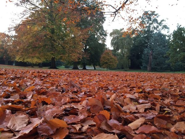 Abundance Autumn Beauty In Nature Branch Change Day Dry Fallen Fallen Leaf Field Leaf Leaves Natural Condition Nature No People Non-urban Scene Outdoors Park Scenics Season  Surface Level Tranquil Scene Tranquility Tree Tree Trunk