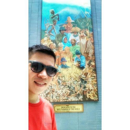 A Selfie salute to all the farmers around the globe! 🌍🌾 📷 . . . Irri Rice Riceworld museum ican xperia xperiadetails themanansala