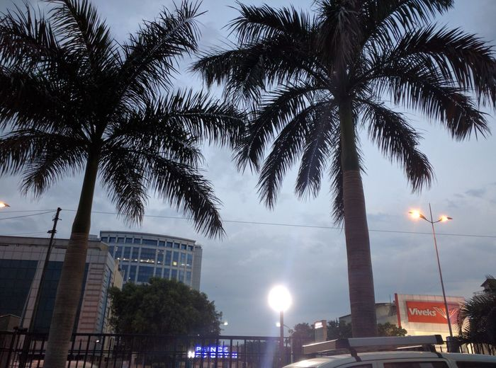 Palm Tree Cloudy Evening Lights Clouds And Sky Evening Evening Sky Tree Building And Sky Beautiful Day Nature Building