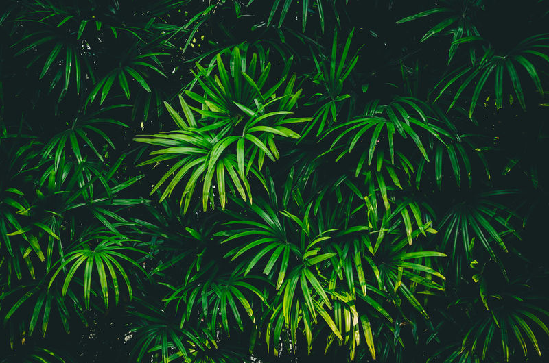 Growth Plant Green Color Leaf Beauty In Nature Plant Part Nature Tree No People Tranquility Outdoors Day Backgrounds High Angle View Freshness Full Frame Close-up Foliage Green