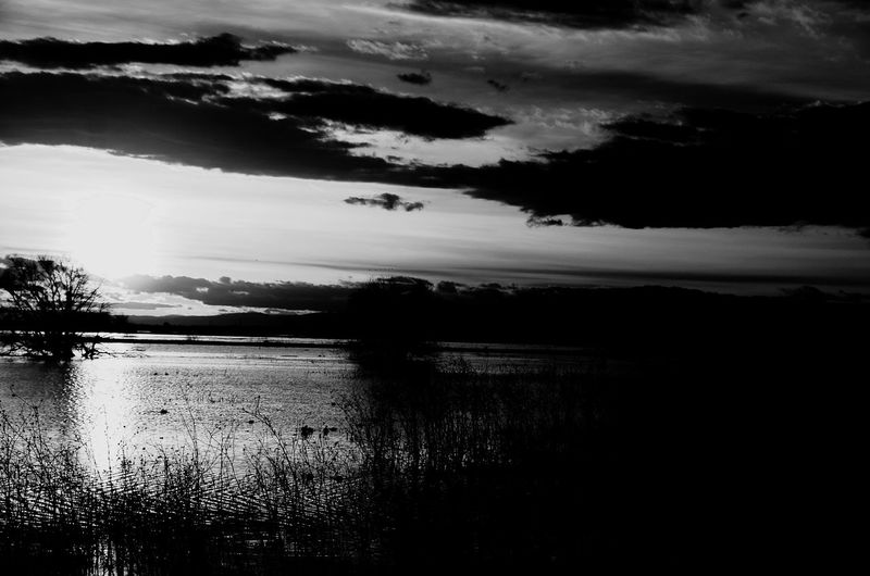 Sunset at Merced wildlife refuge B&w Sky Cloud - Sky Water Nature Scenics - Nature Tree Tranquility Tranquil Scene No People Wet Beauty In Nature Silhouette Plant Outdoors Day Rain Land Lake