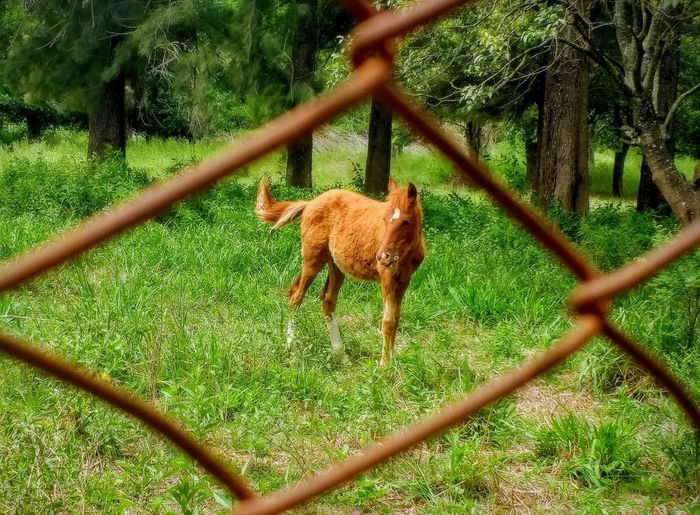 Mammal Animal Themes Animal One Animal Vertebrate No People Day Grass Horse Foal In Field Green Color Fence Wire Fence