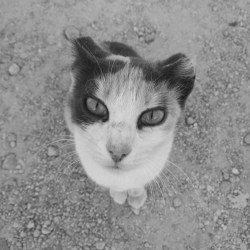 Beautiful Cat Catface Cat♡ Cat Catsagram Nicecat One Animal Cateyes. Pet Photography  Looking At Camera No People Likecat Animal Photography Cat Potrait Cat Outdoors