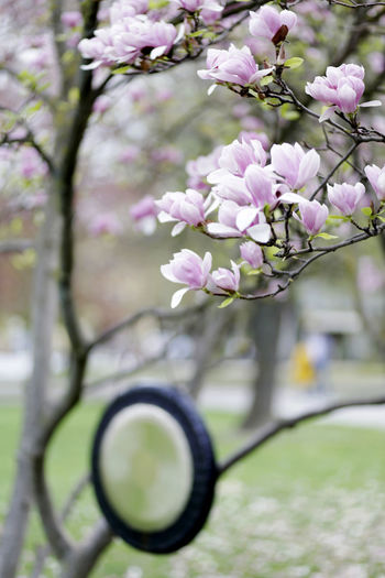 Blossom Cherry Blossom Cherry Tree Close-up Flower Flower Head Flowering Plant Fragility Freshness Growth Nature No People Pink Color Plant Tree Vulnerability