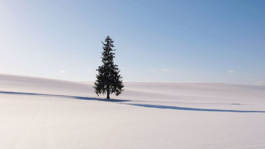 Christmas Tree Land Scenics - Nature Tranquil Scene Tranquility Winter Snow First Eyeem Photo