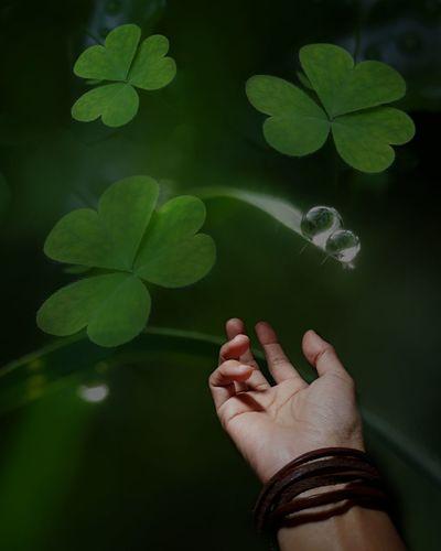Cropped hand gesturing below dew drops on leaf