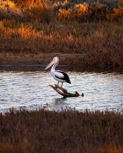 Bird perching on driftwood in lake
