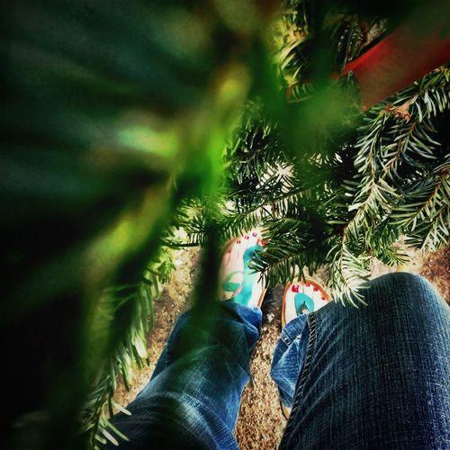 Birks IN December