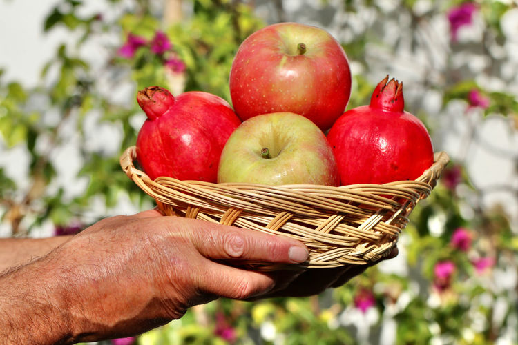 Close-up of hand holding apples in basket