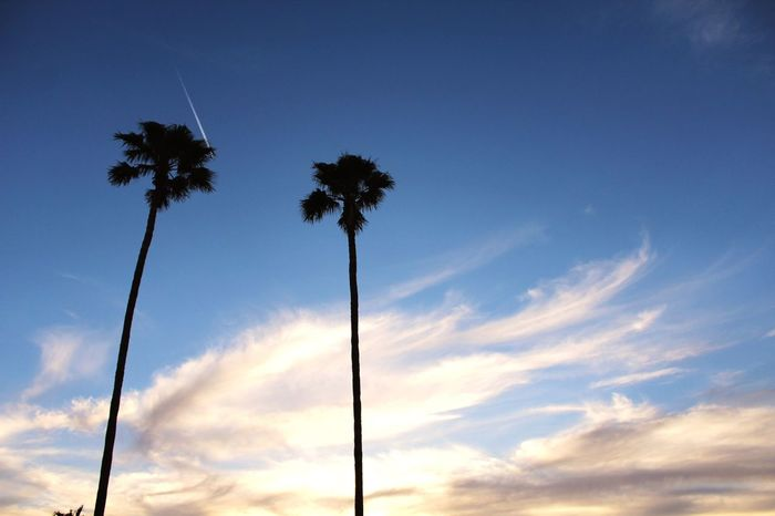 Photography Ruleofthirds Palm Trees ✈
