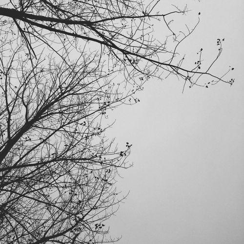 早秋惊落叶,飘零似客心。 翻飞未肯下,犹言惜故林。