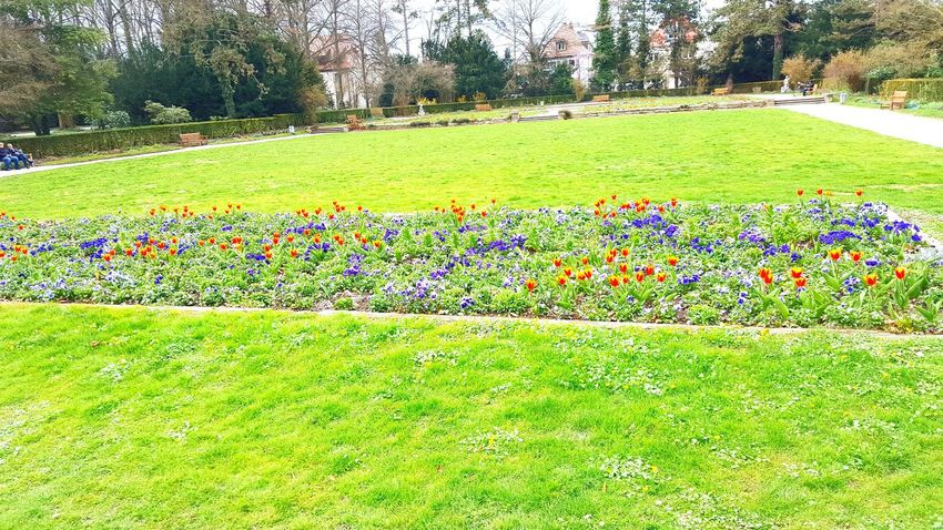 Growth Grass Flower Green Color Nature Beauty In Nature Multi Colored Day Field Plant Park - Man Made Space Tree Outdoors Tranquility No People Flowerbed Freshness Scenics Flower Head