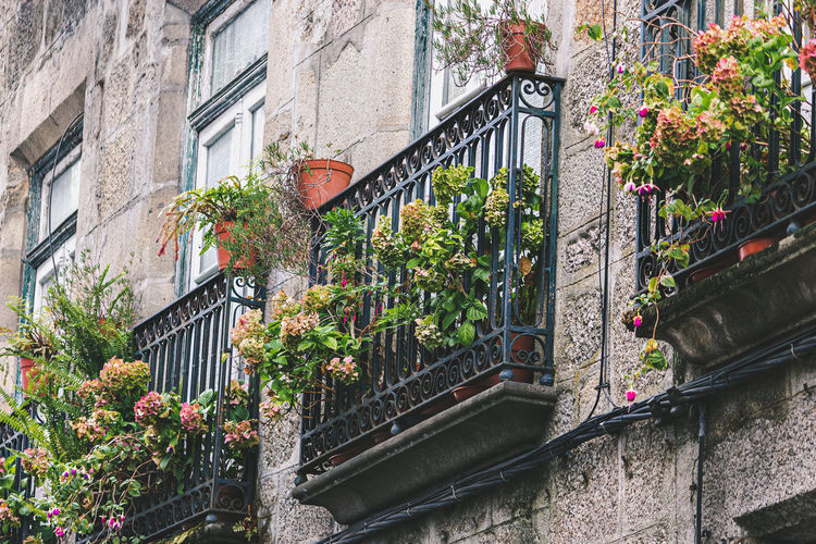Potted plants by railing and buildings in city
