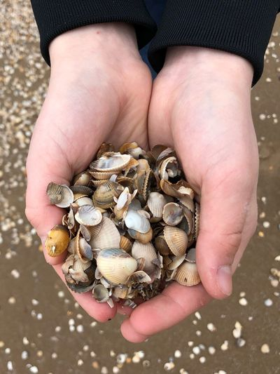 Human Hand Hand Human Body Part One Person Holding Animal Wildlife High Angle View Shell Beach Close-up Finger Hands Cupped