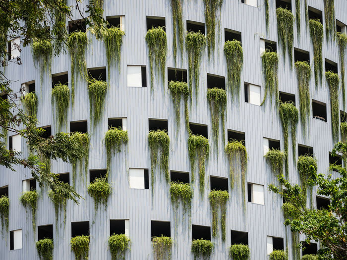 Architecture Building Exterior Window Built Structure Plant Building Day No People Residential District Outdoors Full Frame Nature Growth In A Row Repetition City Tree Low Angle View Side By Side Ivy Apartment Growth Green Sustainable Growing Environment Environmental Conservation The Architect - 2019 EyeEm Awards