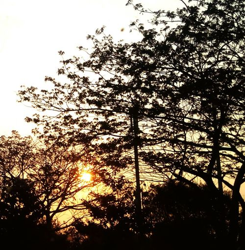 Behind the leaves. Sunset Trees Silhoutte Komorebi