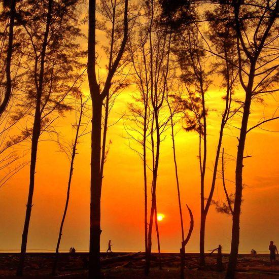 Beauty In Nature Sunset Orange Color Tree Trunk Non-urban Scene
