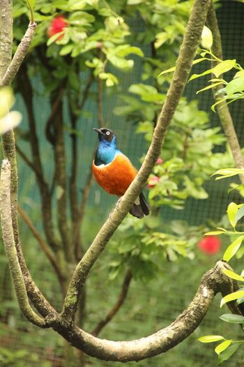 Colorful Park Wildlife Bird Bird Photography Birds_collection Birds Park Nature Malezya Day Nice