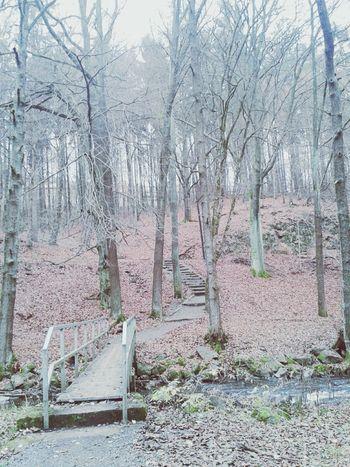 Wald Wood ♥