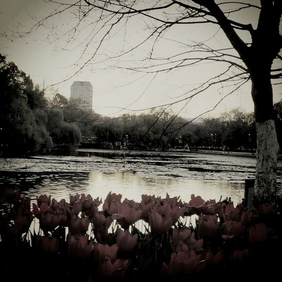 Monochrome Lakeside Lake